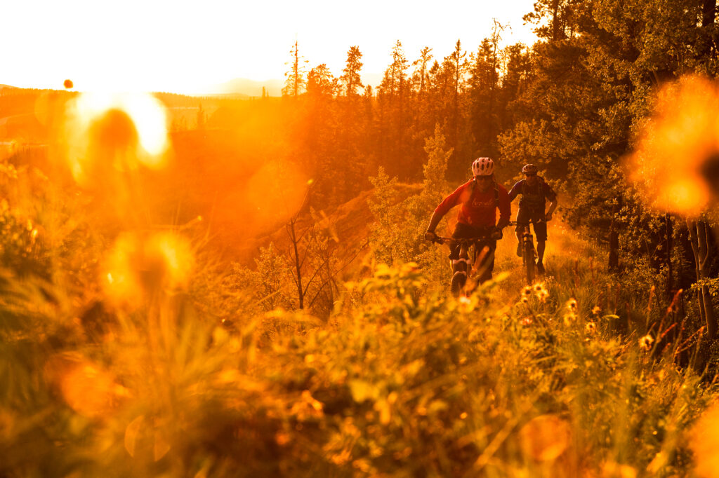 Two mountain bikers ride grassy singletrack trail in golden hour sunset, Yukon, Canada (backlit)